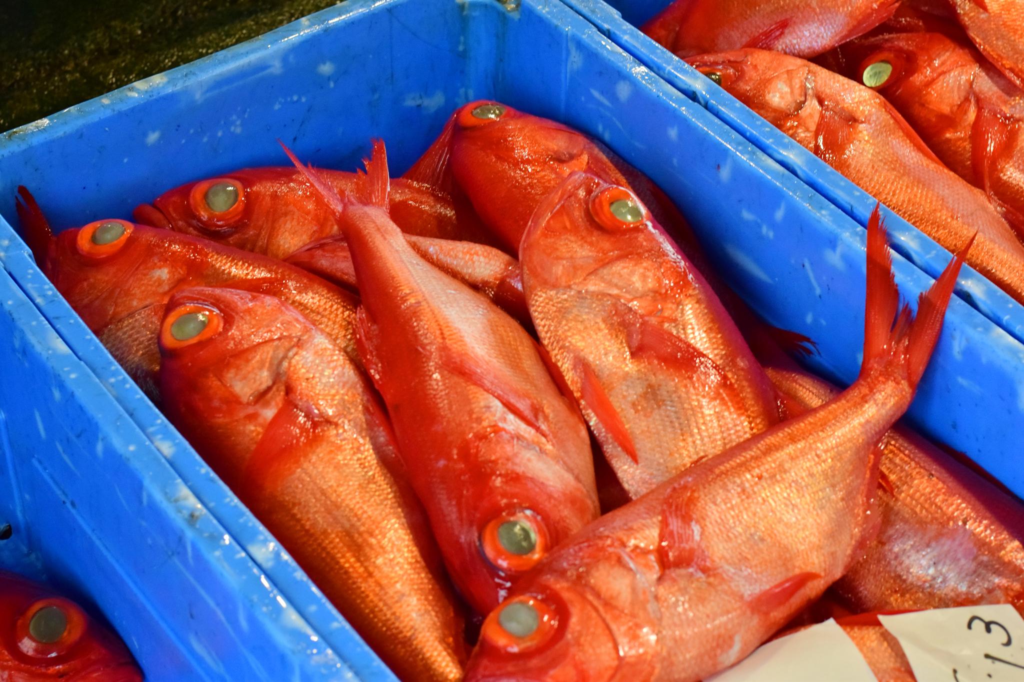 下田水揚げの金目鯛